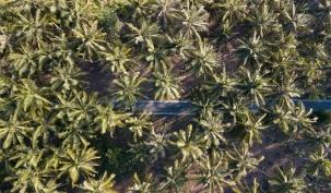 crystal beach drone 2